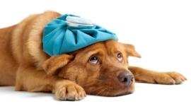 prodotti per la cura dell animale domestico in farmacia a rimini