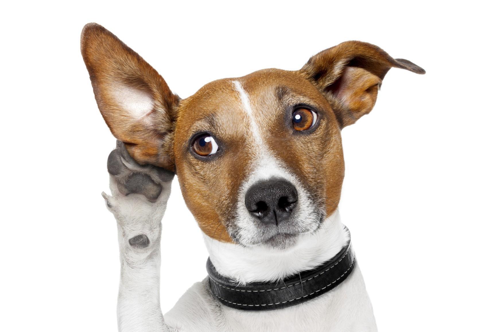 in farmacia c'è il test per il pelo del cane a rimini