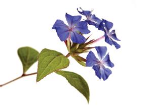 fiori di bach farmaci rimini